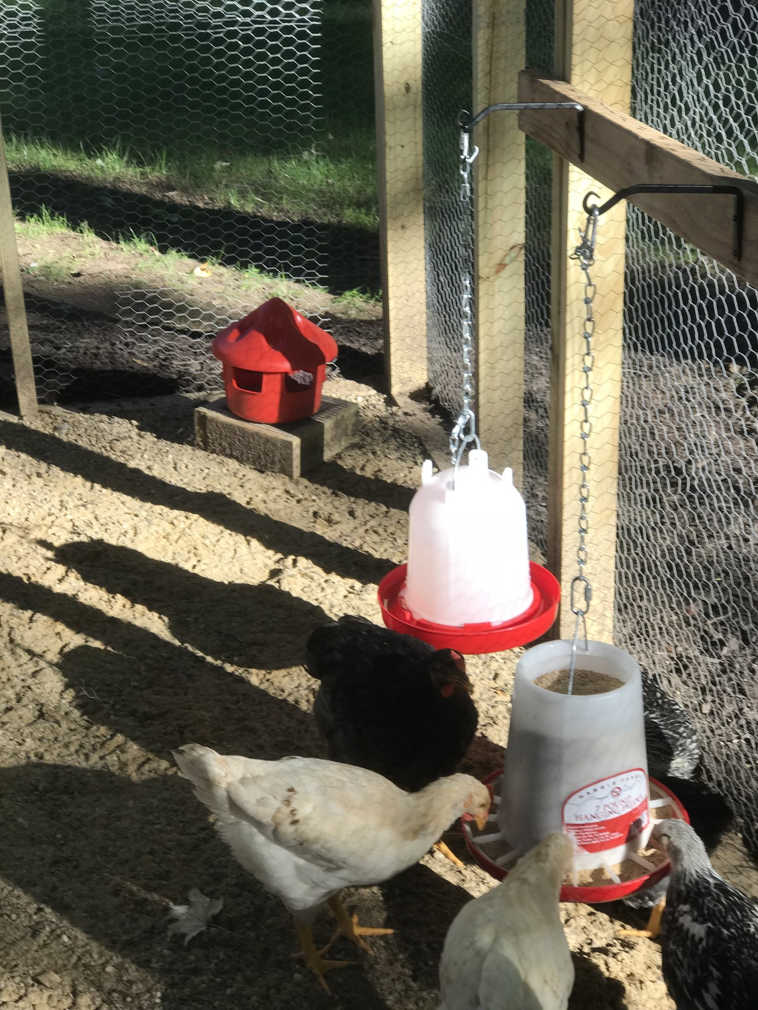 Granny Robin's Chicken Coop | BackYard Chickens - Learn ...