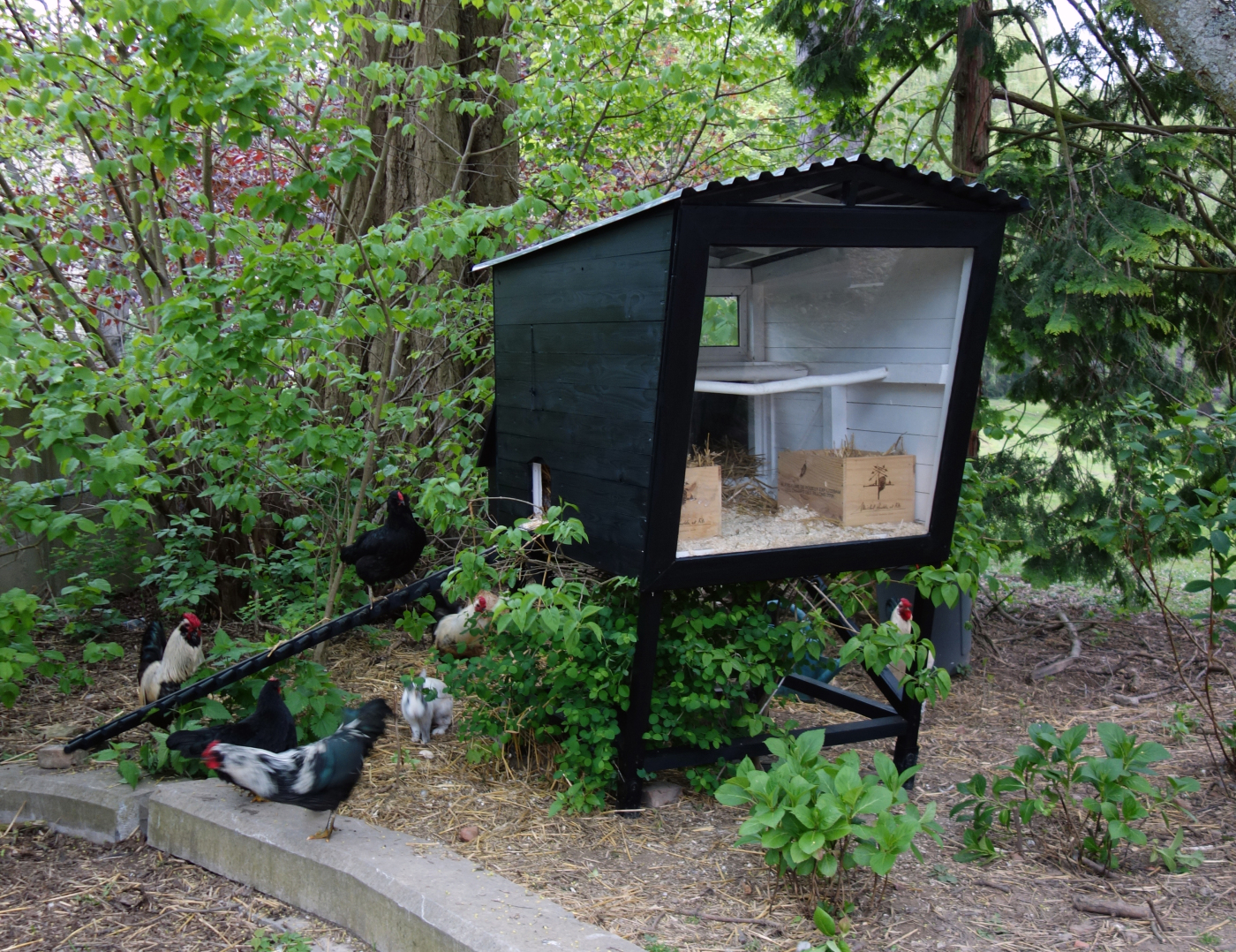 Modern Coop Design Backyard Chickens Learn How To Raise Chickens
