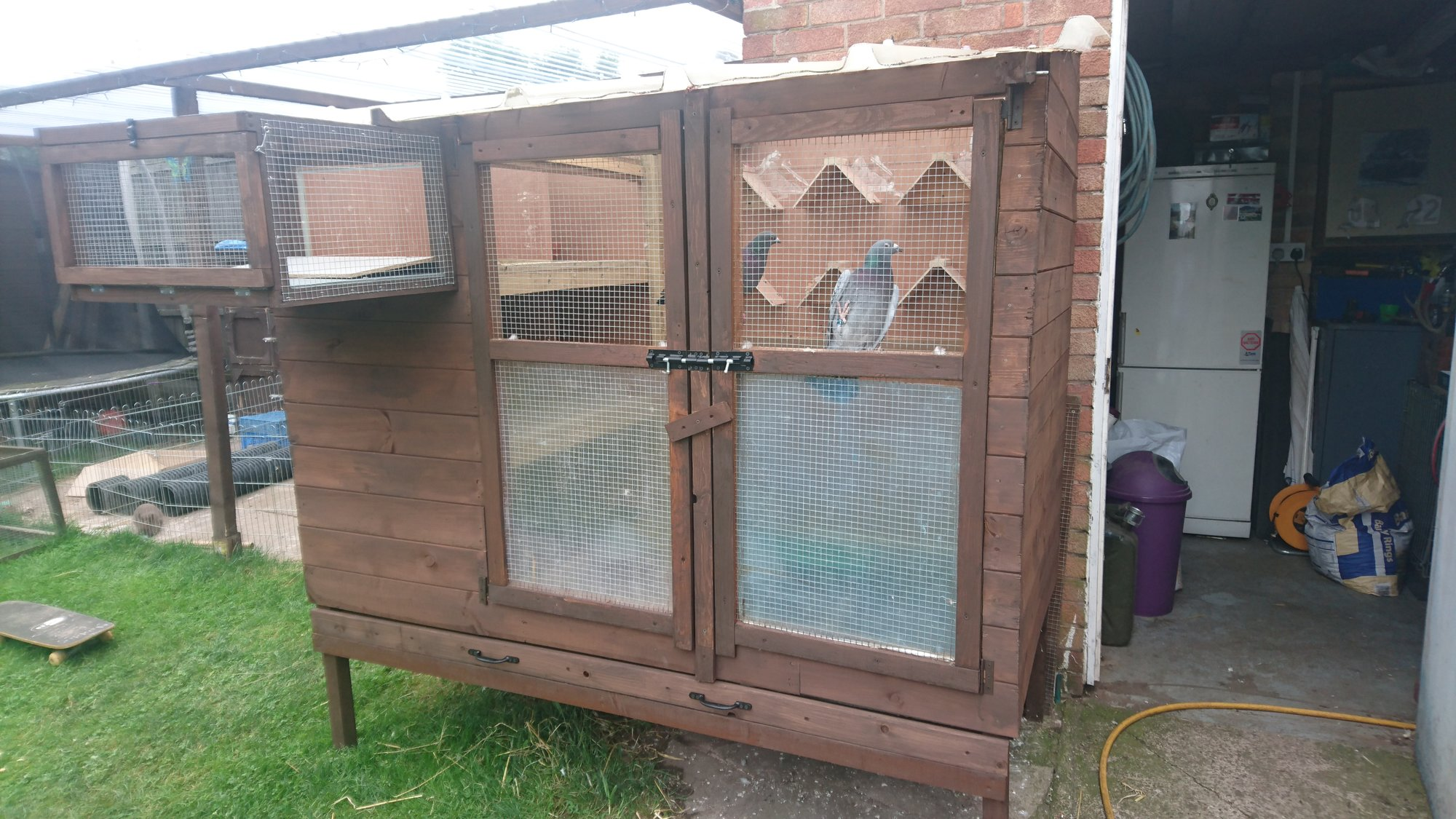 Pigeon Loft Build Backyard Chickens Learn How To Raise Chickens