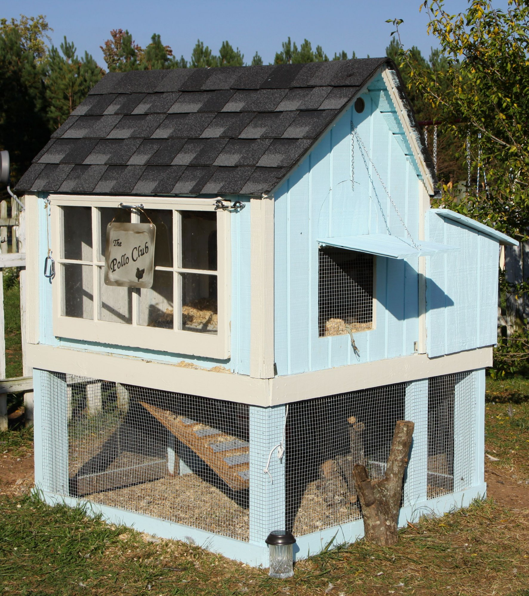 The Pollo Club | BackYard Chickens - Learn How to Raise Chickens