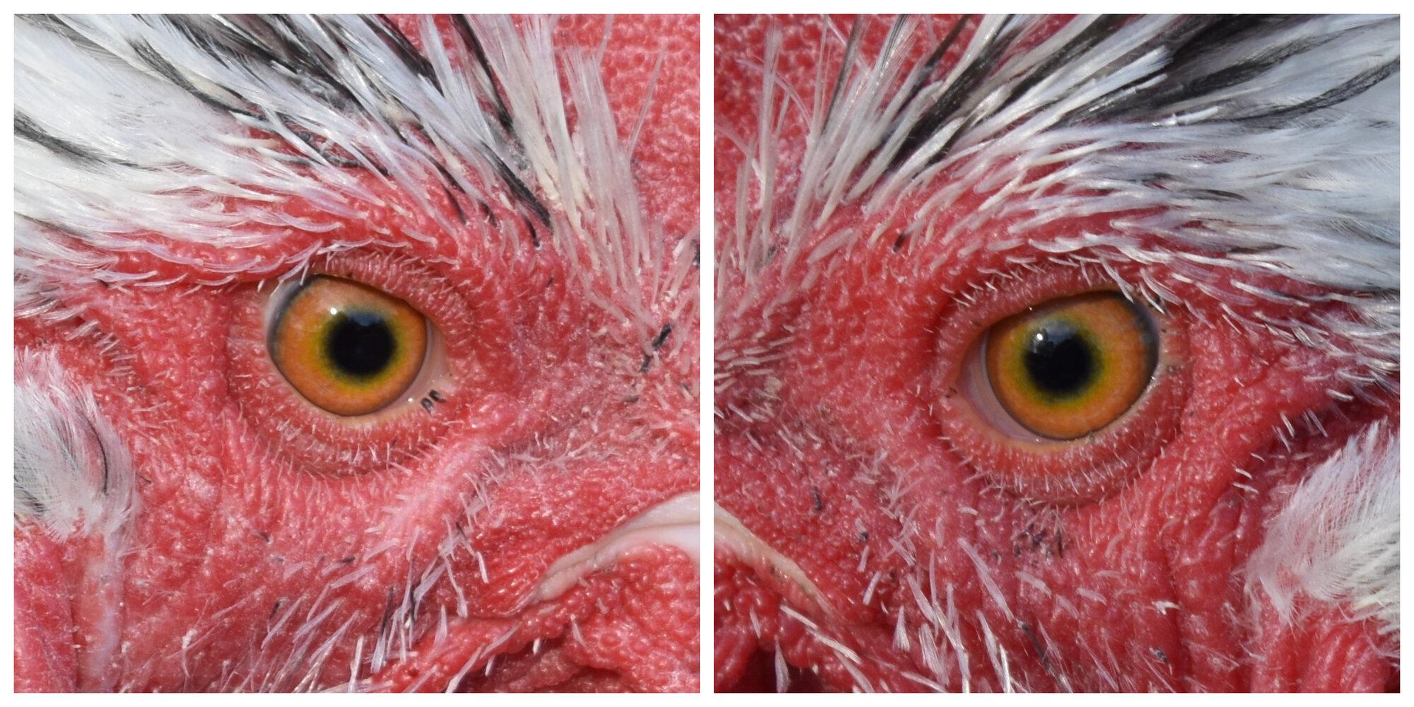 1-20-21 close eyes.jpg