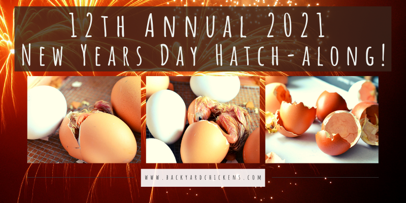 12th Annual 2021 New Years Day Hatch-along! (1).png