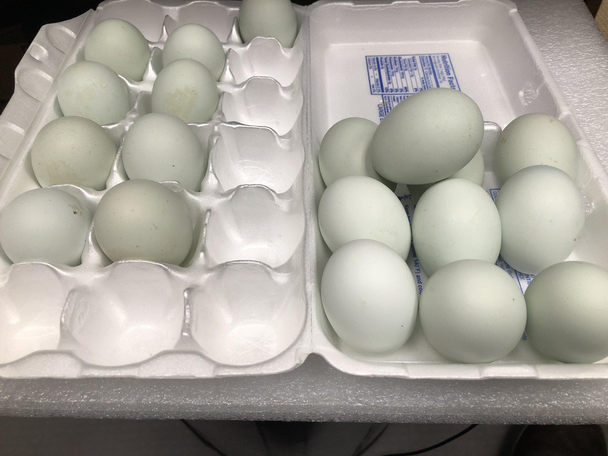 19 eggs carton 2.jpg