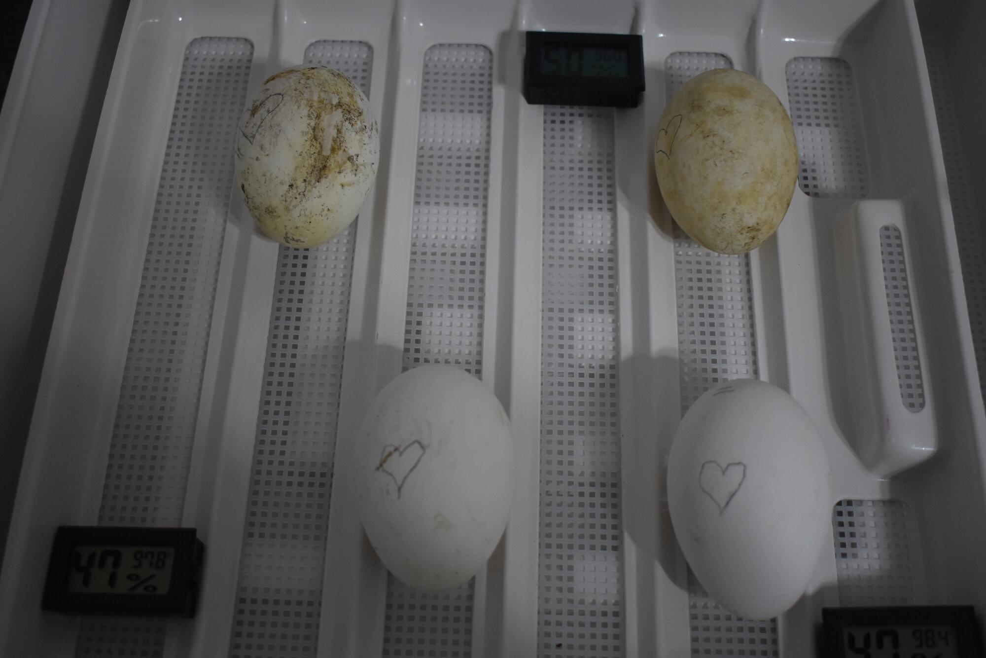 2-24-20 Sebastopol Eggs!.JPG