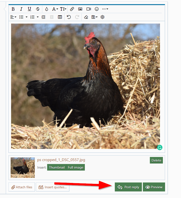 2020-07-20 16_35_10-2021 BYC Calendar - We Need Your Pictures! _ BackYard Chickens - Learn How...png
