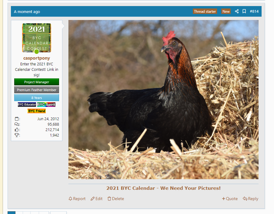 2020-07-20 16_35_53-(3) 2021 BYC Calendar - We Need Your Pictures! _ BackYard Chickens - Learn...png