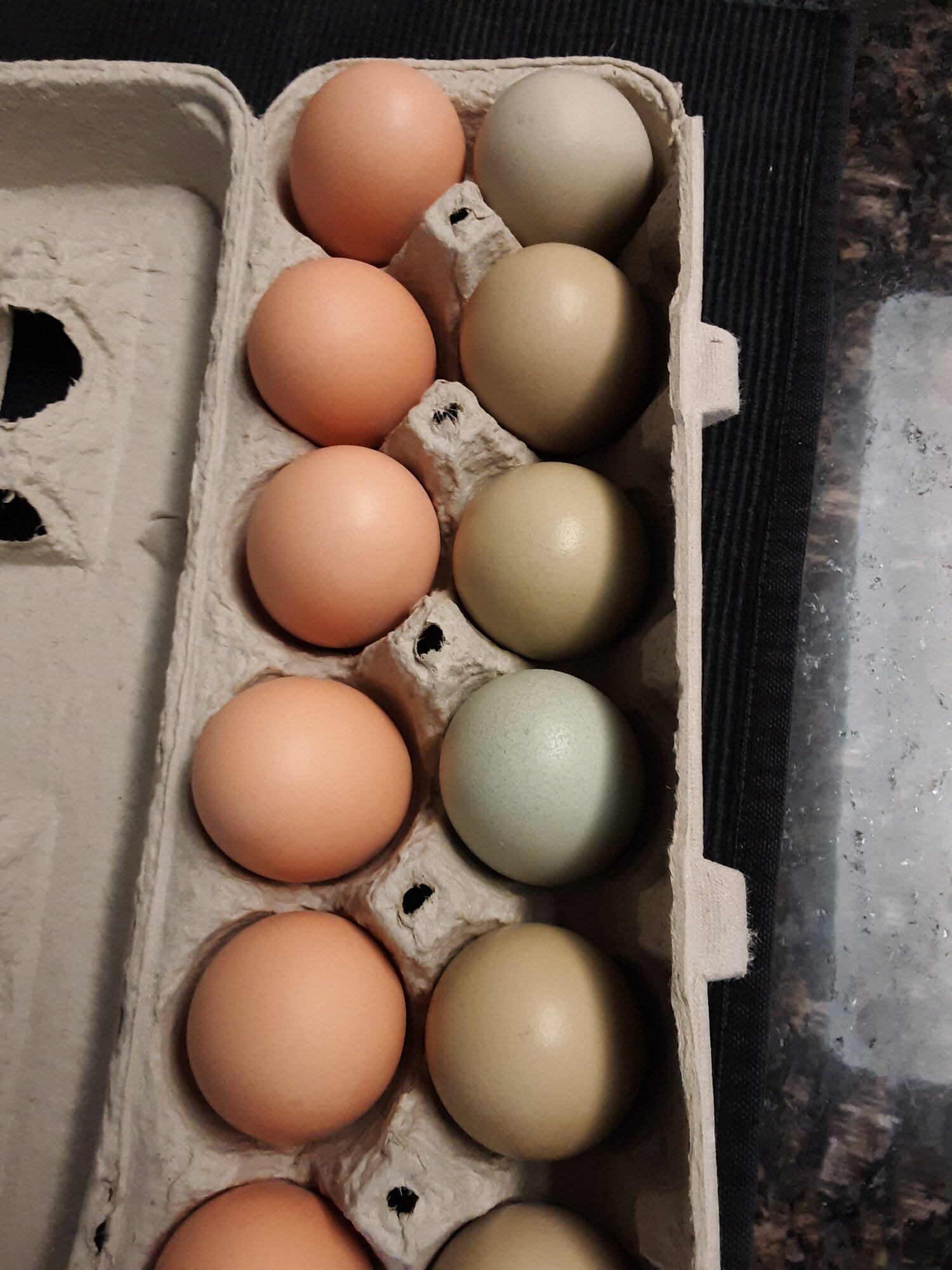 2020 Whitings - 01 Egg:Red's off color.jpg