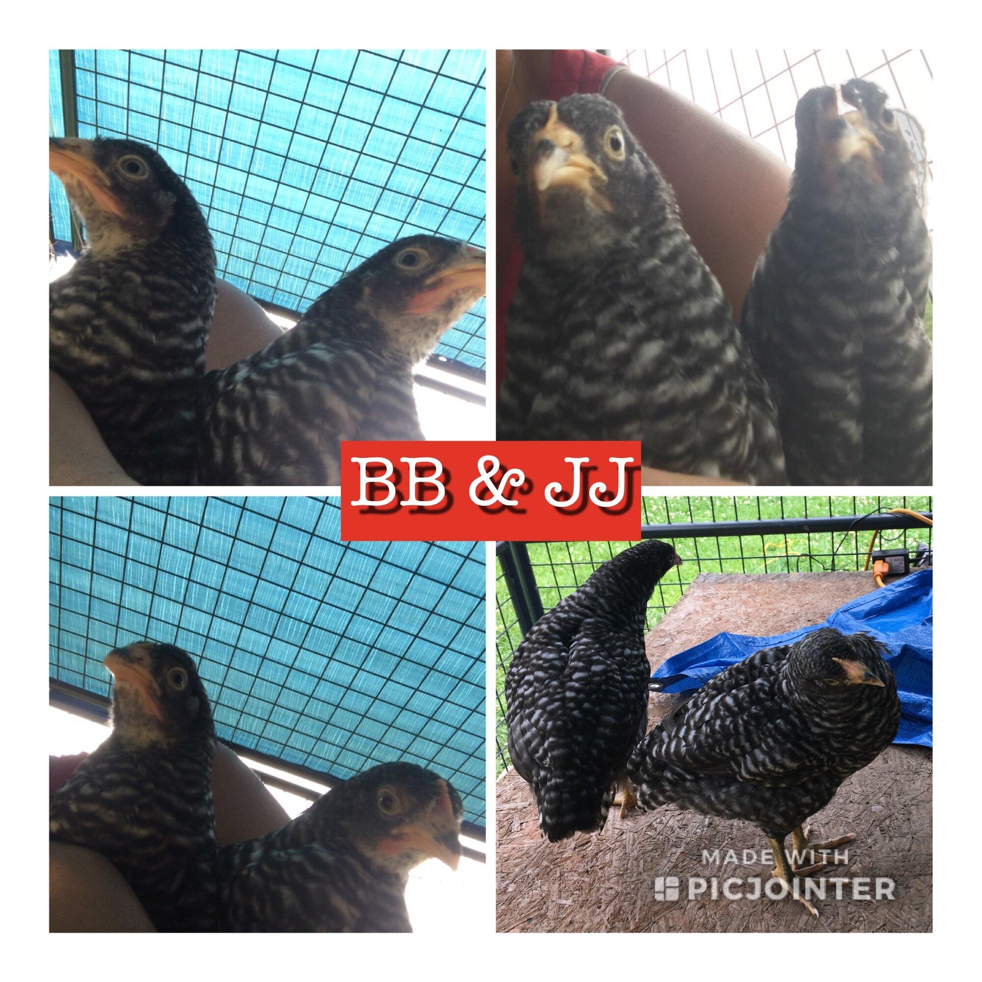 3628CCEA-3D5B-4AF8-B746-62165F539476.jpeg