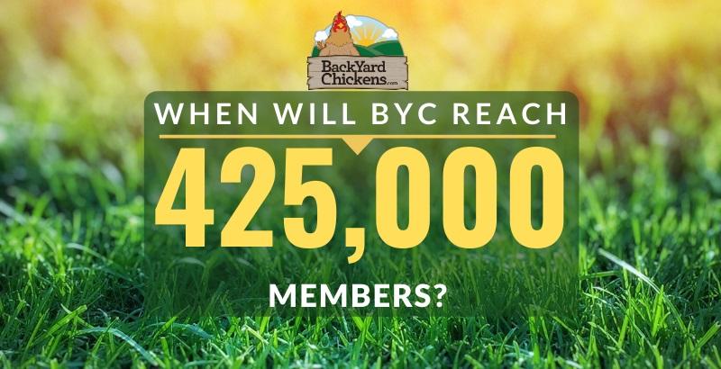 425000 BYC members.jpg