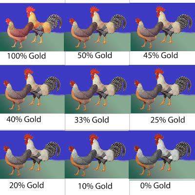 9-place CL color grid - grid2 copy.jpg