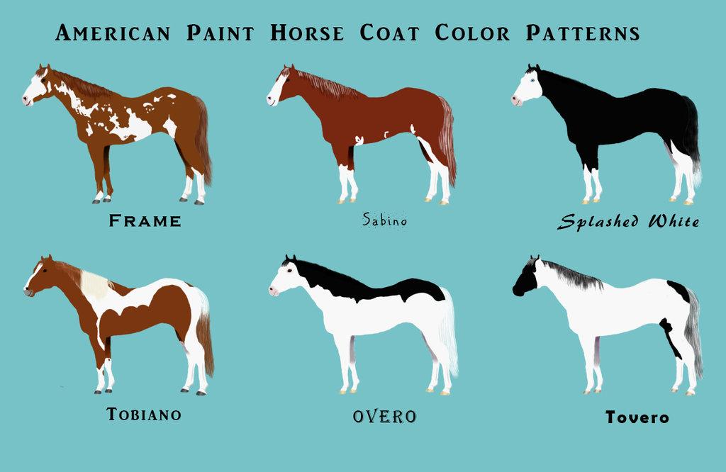 american_paint_horse_chart_by_faolan22-dau0x7i.jpg