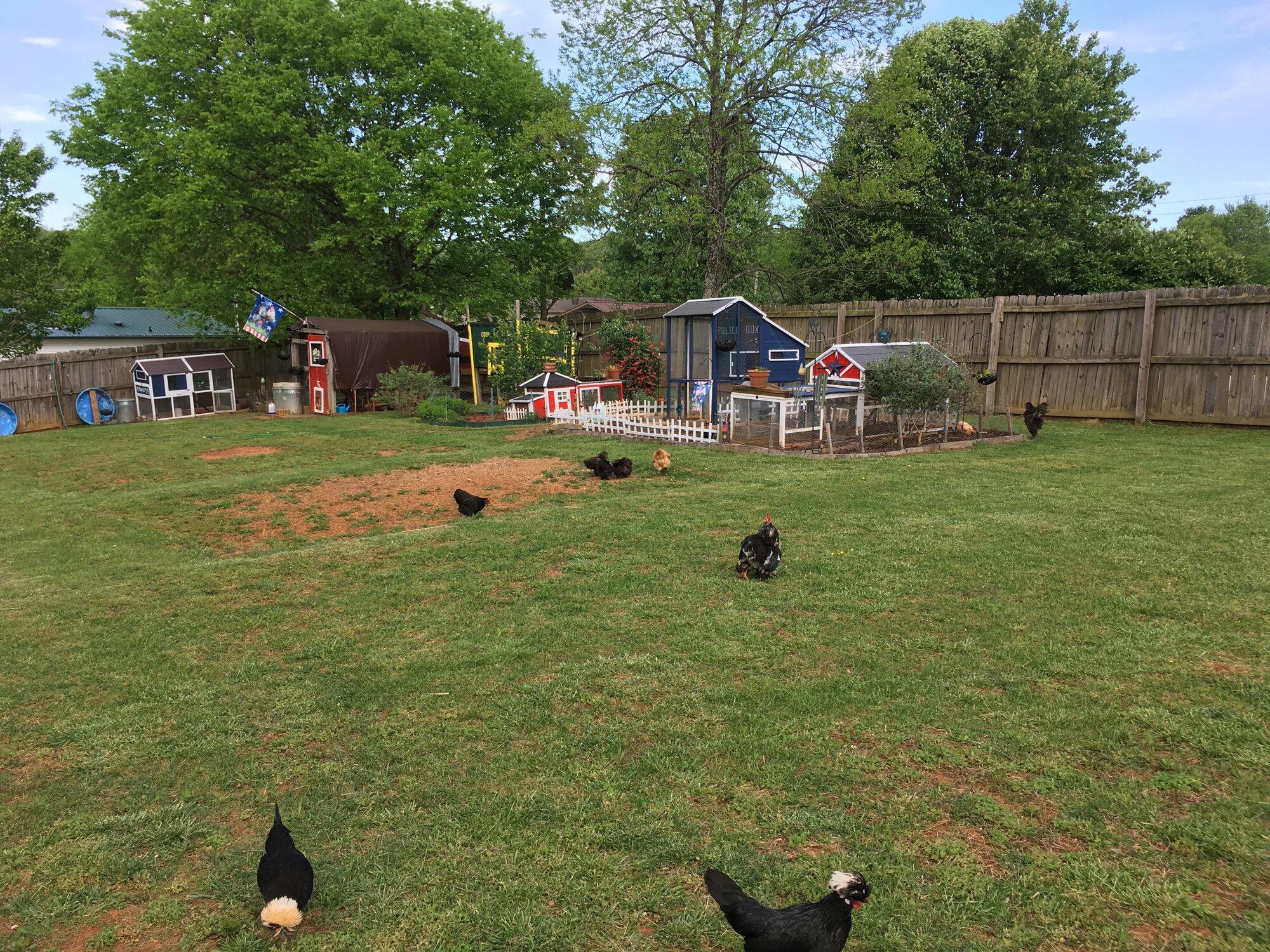 Backyard Blooming 6.jpg