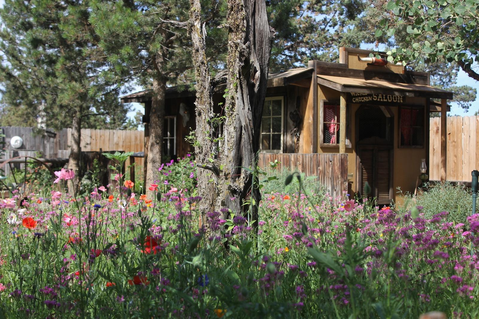 Beautiful back yard July 2015 038.JPG