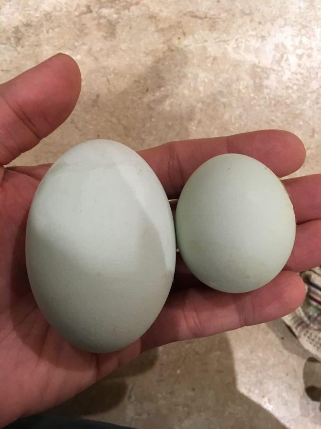 Big Egg III.jpg