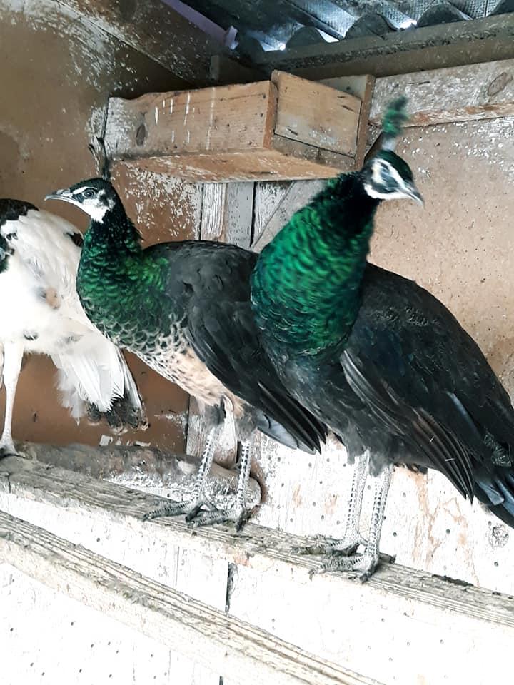 black and green 3.jpg
