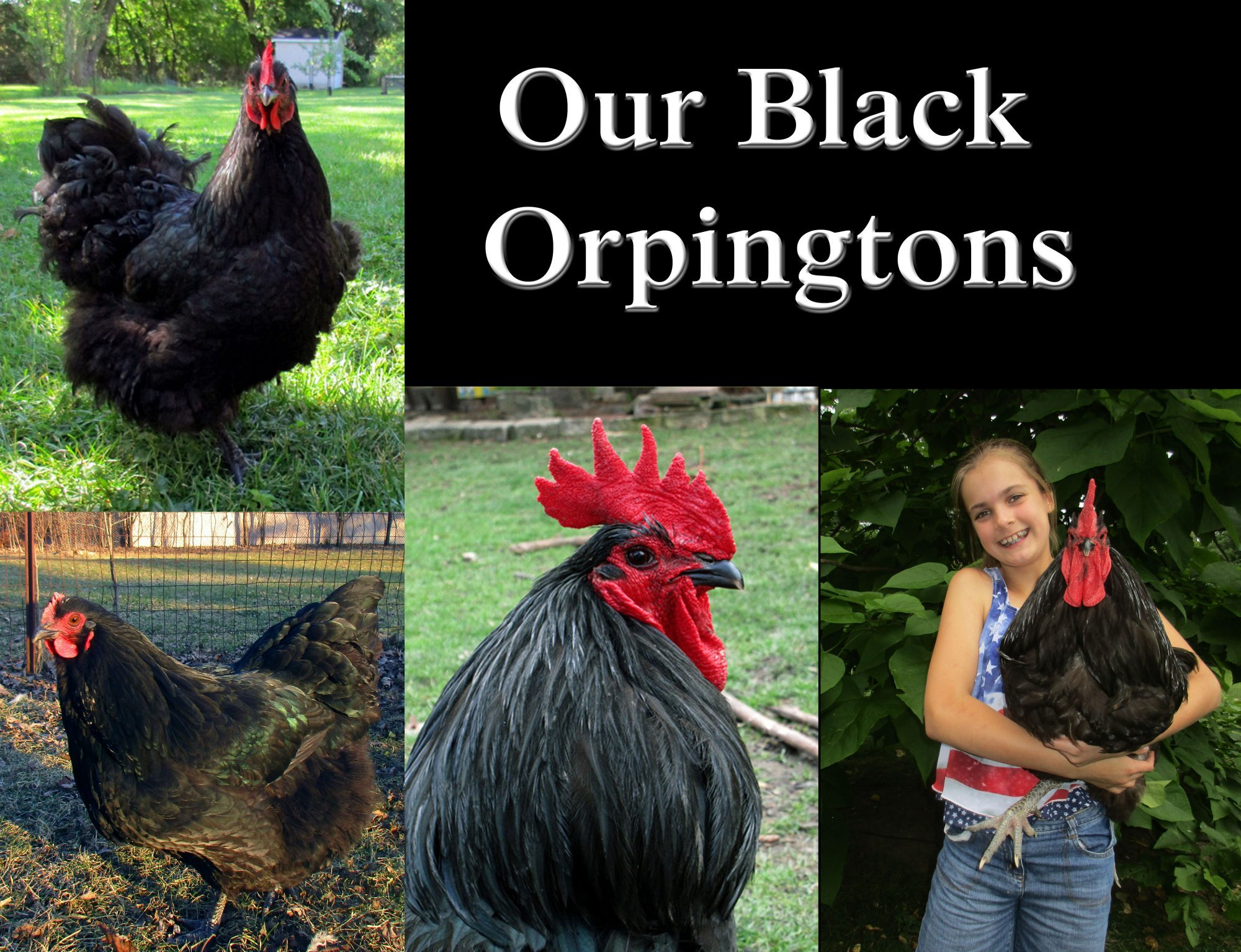 black orps adults.jpg