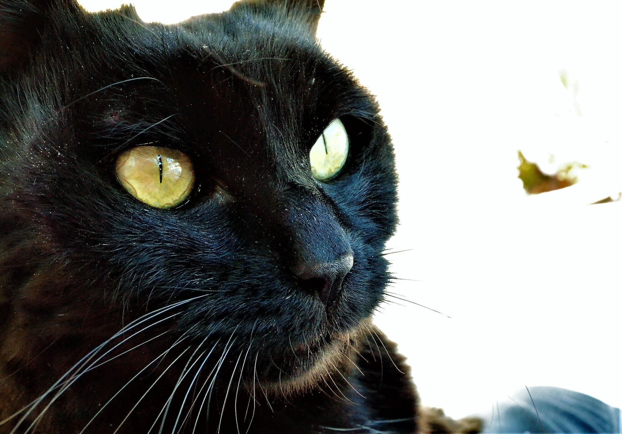 blackcat1.jpg
