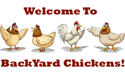 BYC-chatty-chickens.png