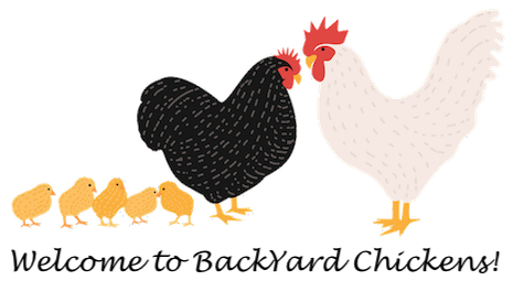 byc-chicken-family.png
