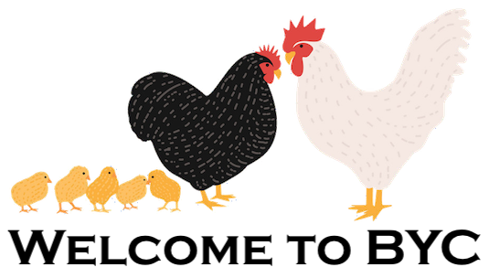 BYC-chicken-family3.png