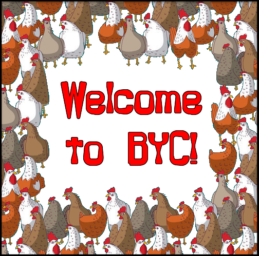 BYC-mixed-flock-border.png