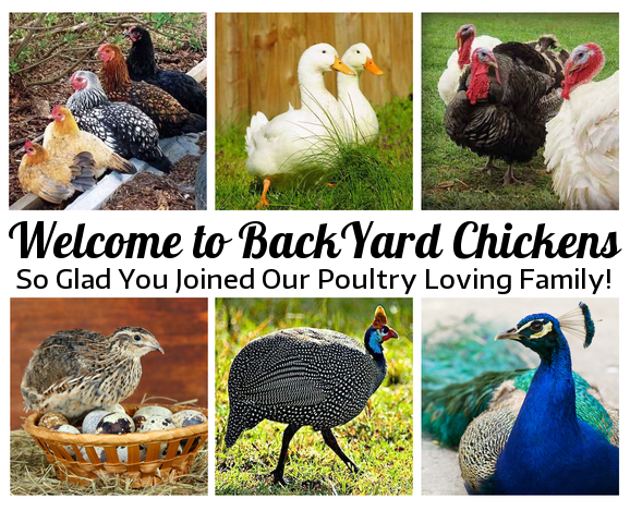 byc-poultry-family.png
