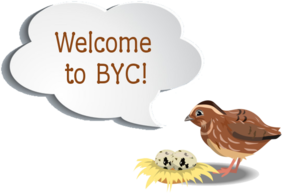 byc-quail-quote.png