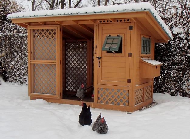 cabin-coop.jpg
