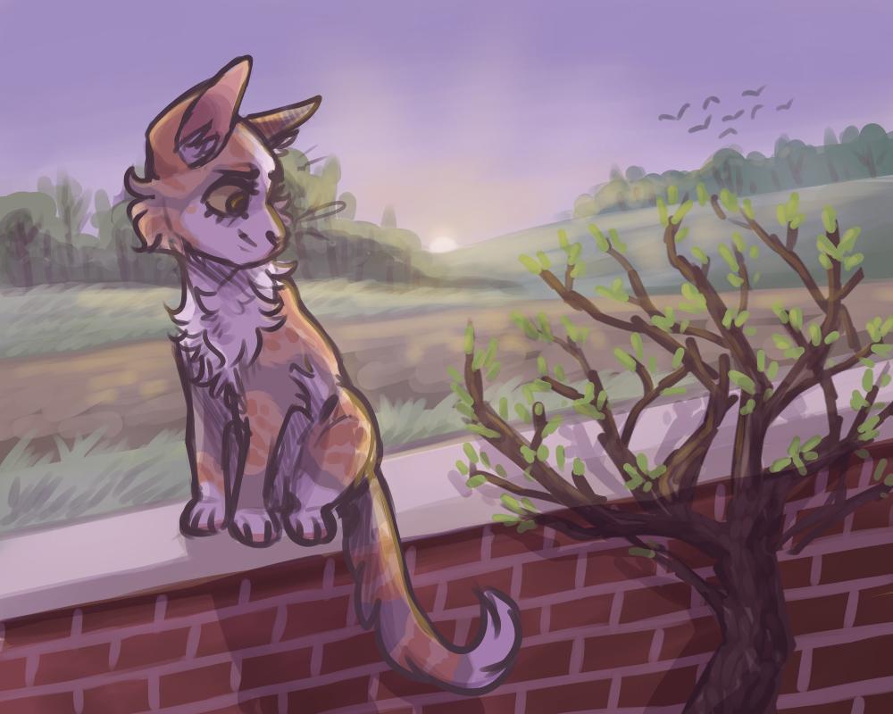 cat (1).png