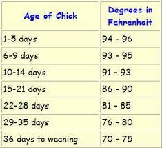chick heat schedule.jpg
