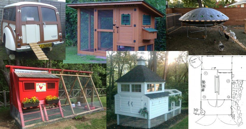 chicken-coop-rating-collage.jpg