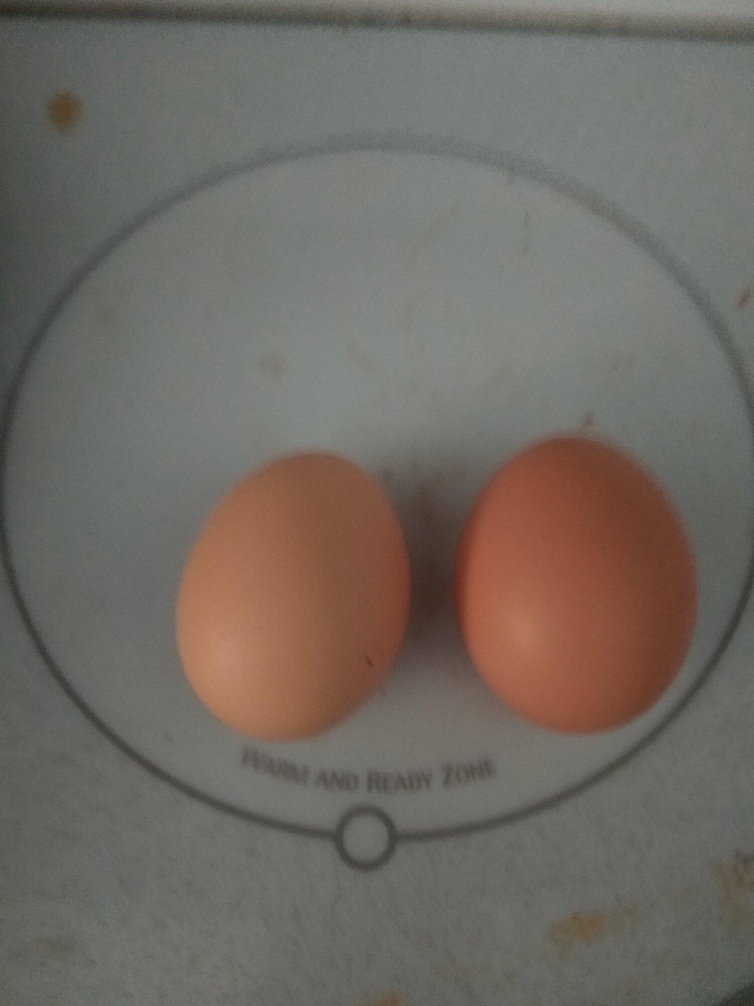 Chicken egg difference.jpg