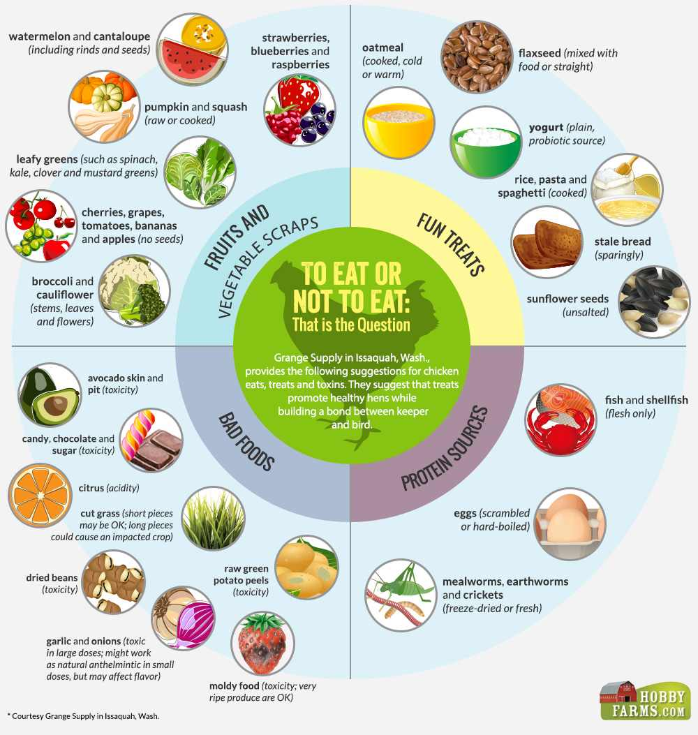 chicken-feed-infographic.jpg