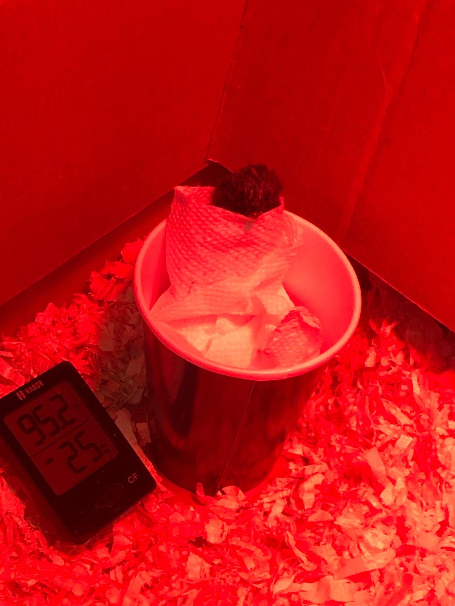 chicken in cup.jpg