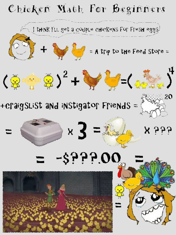 chicken math.jpg