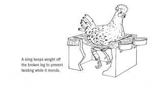 chicken sling.jpg