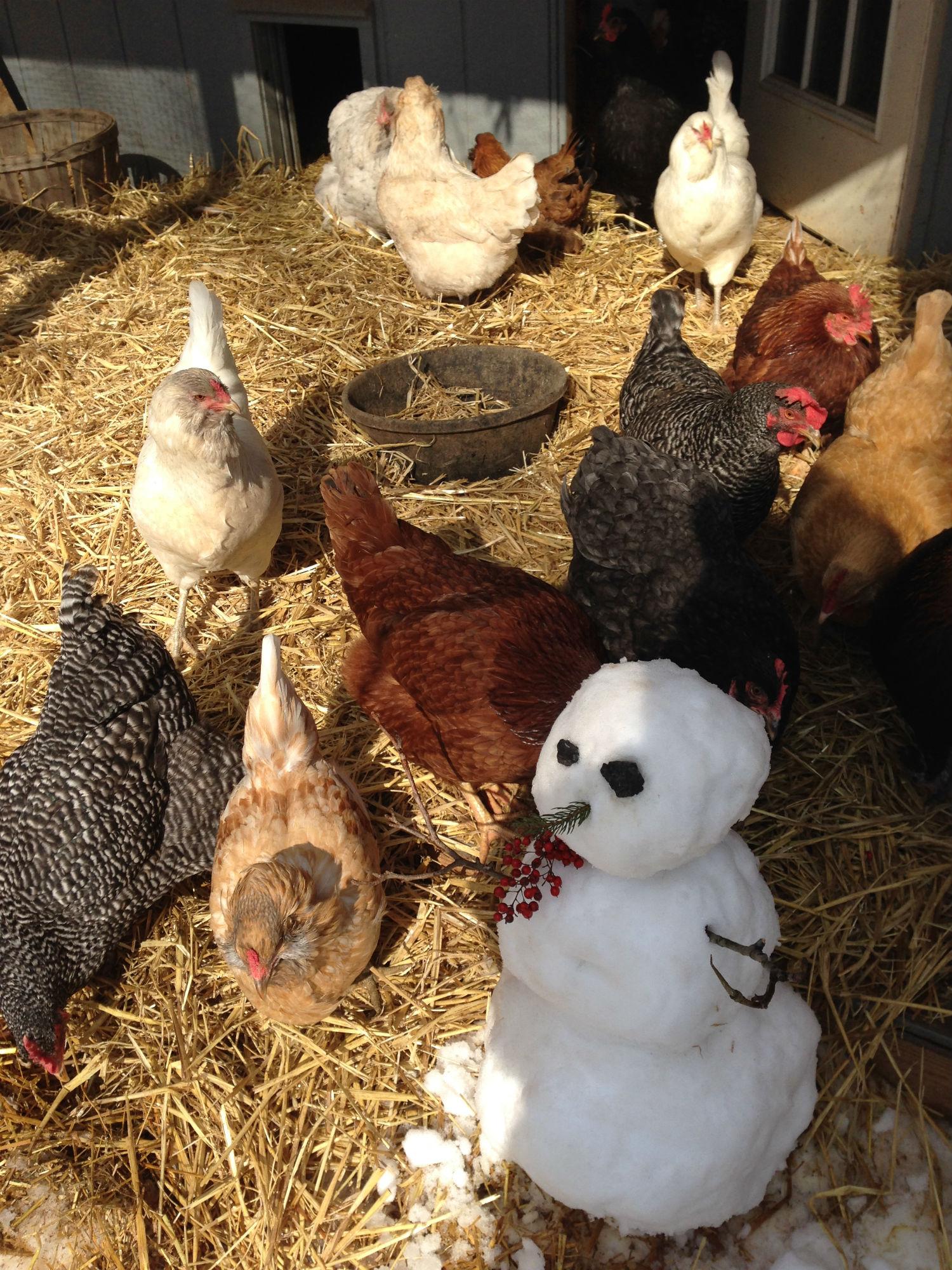 chicken snowman.jpg