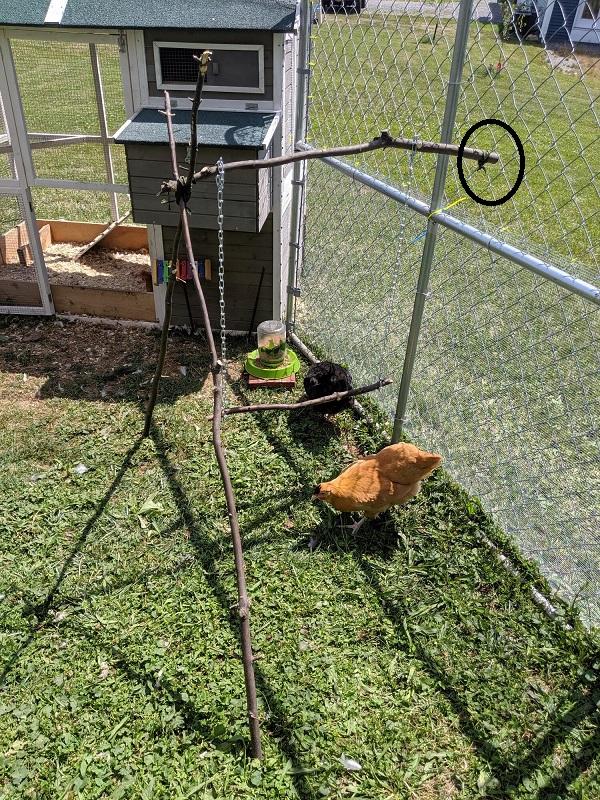 chicken swing.jpg