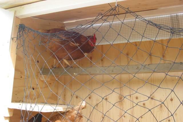 Chicken-Tractor-028.jpg