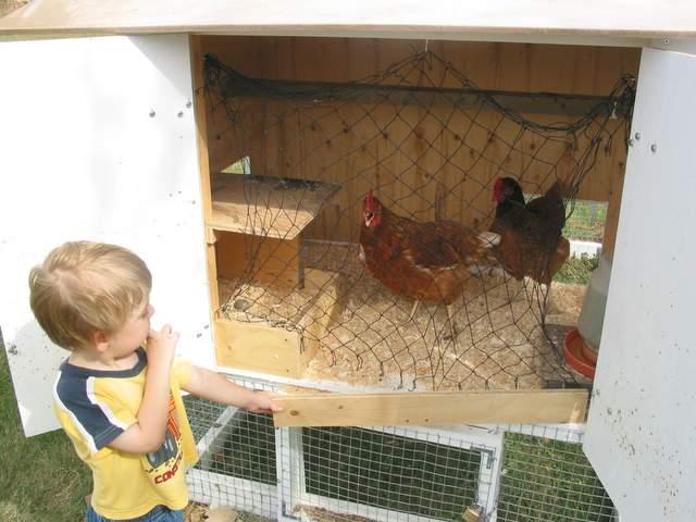 Chicken-Tractor-031.jpg