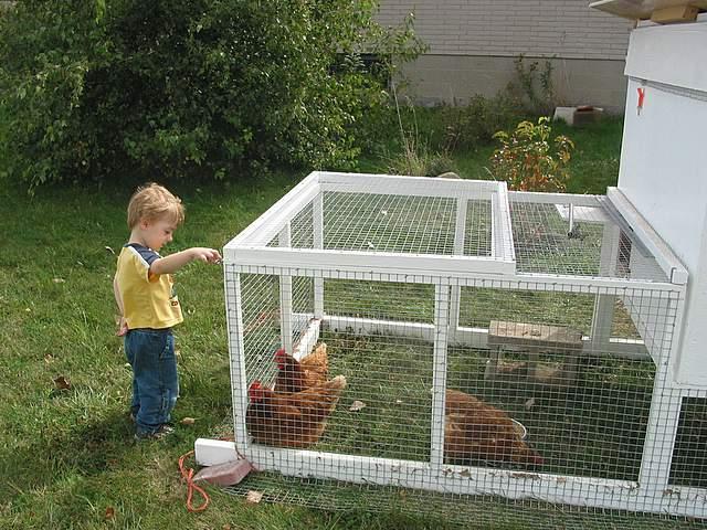 Chicken-Tractor-038.jpg