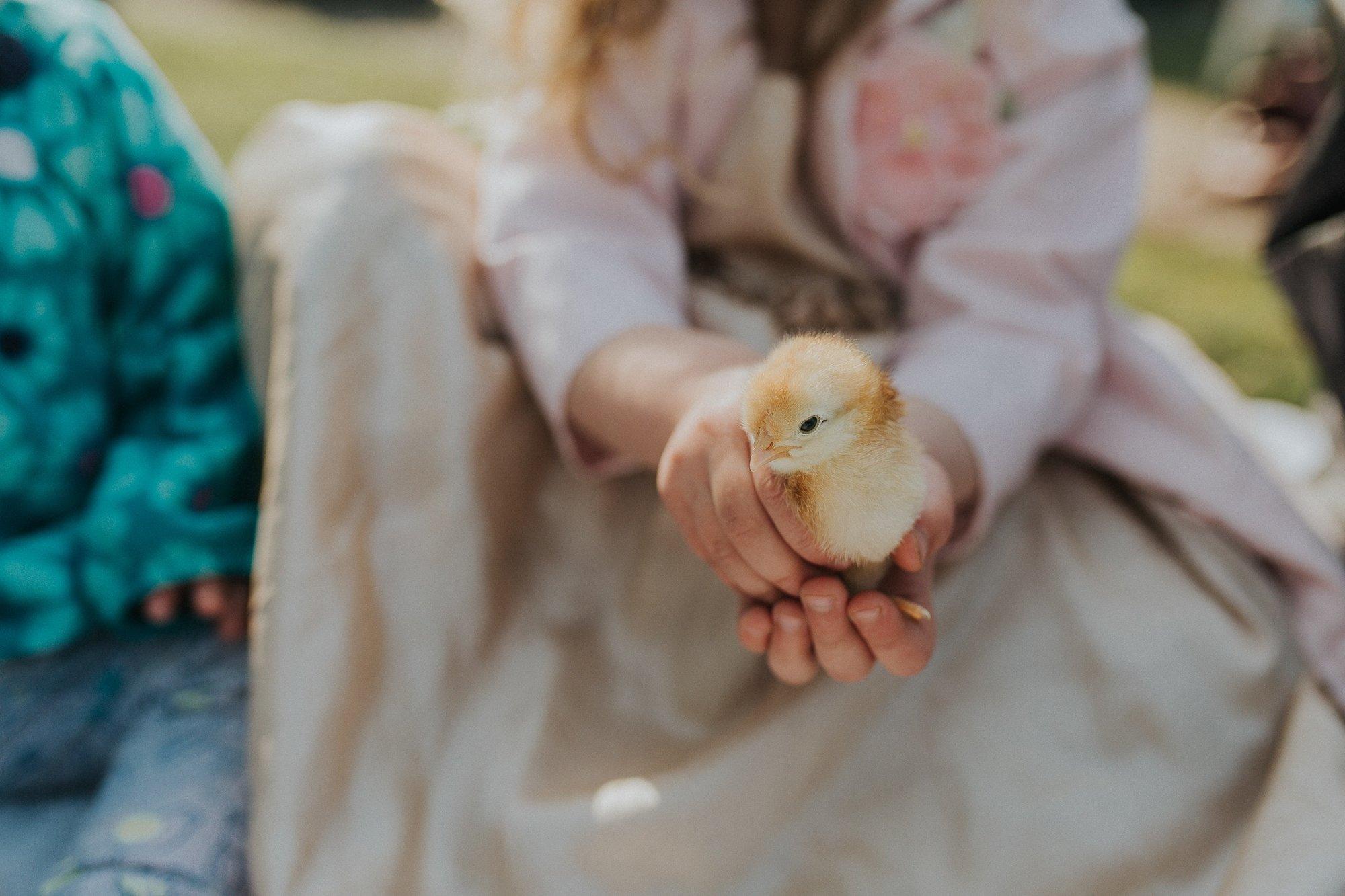 chicks-6.jpg.jpeg