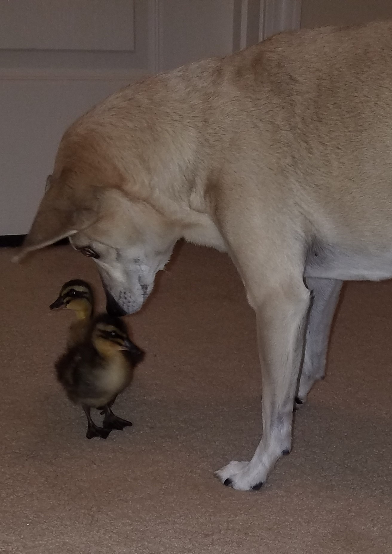 chico with ducks.jpg