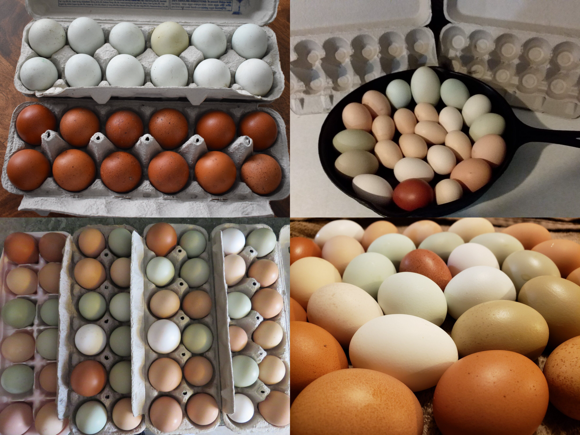 collage new egg.png