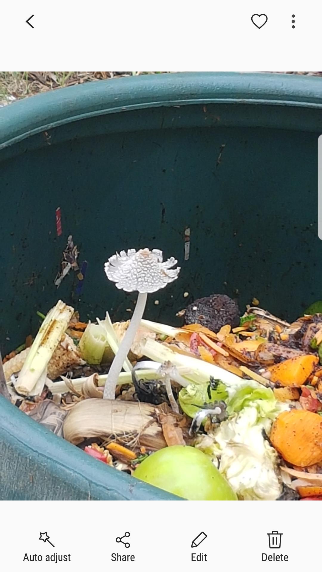 compost mushroom.png