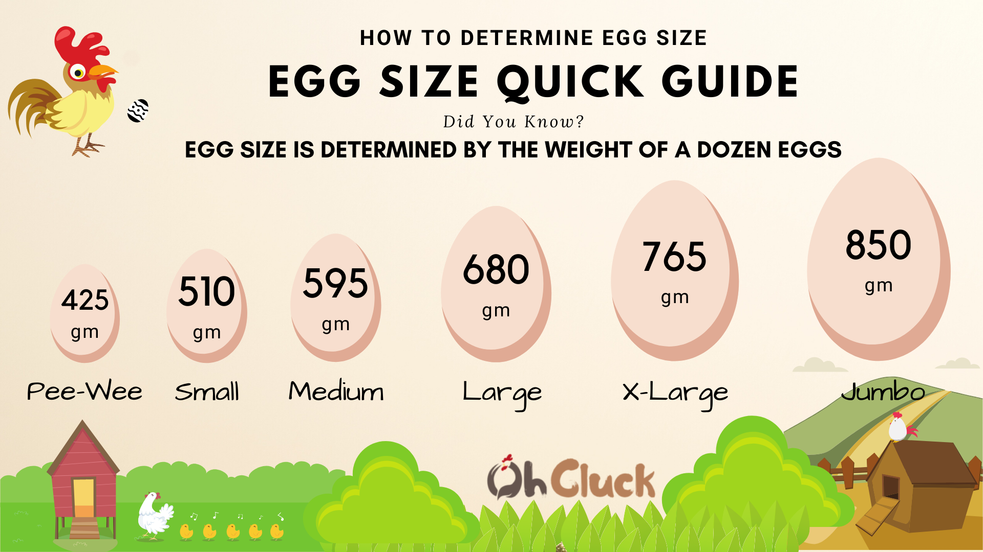 Copy of Egg Size Chart.png