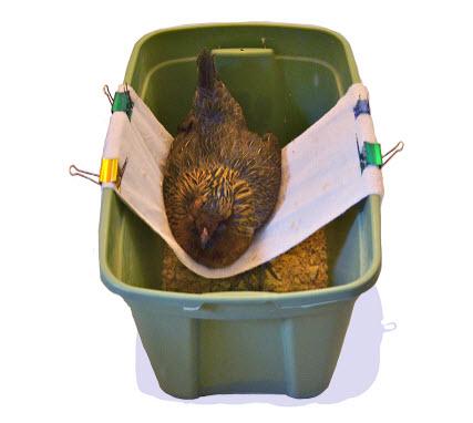 DIY-Plastic-Bin-Chicken-Sling.jpg