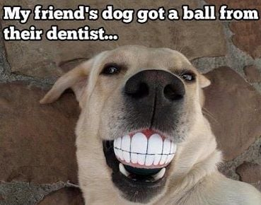 dog ball.jpg