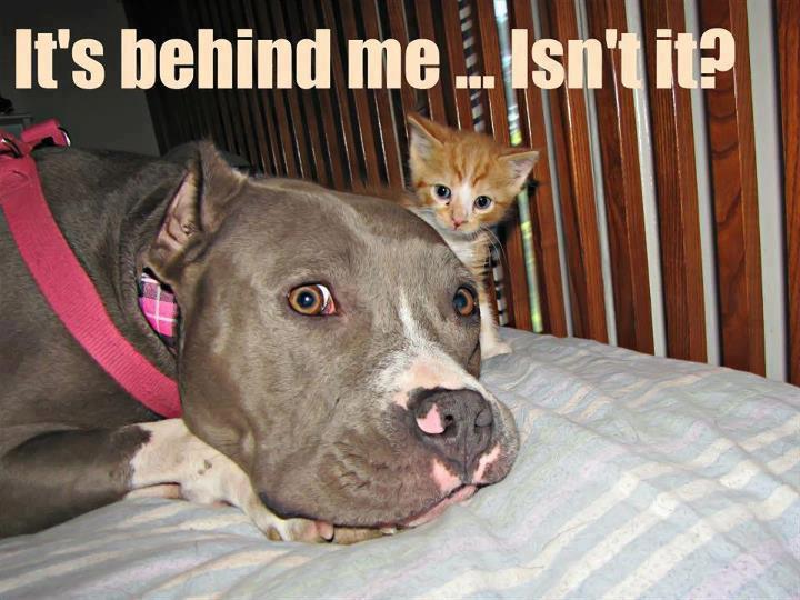 dog-behind-me.jpg