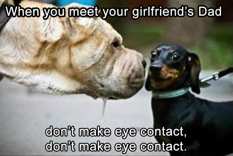 dog-eyecontact-1.jpg